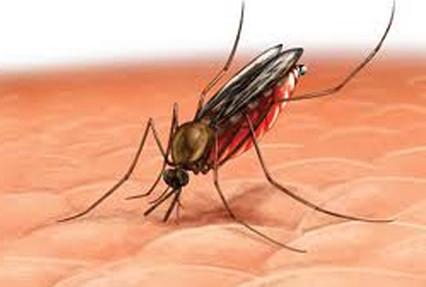 Bệnh sốt rét có thể lây từ người bệnh sang người lành bằng đường nào ?